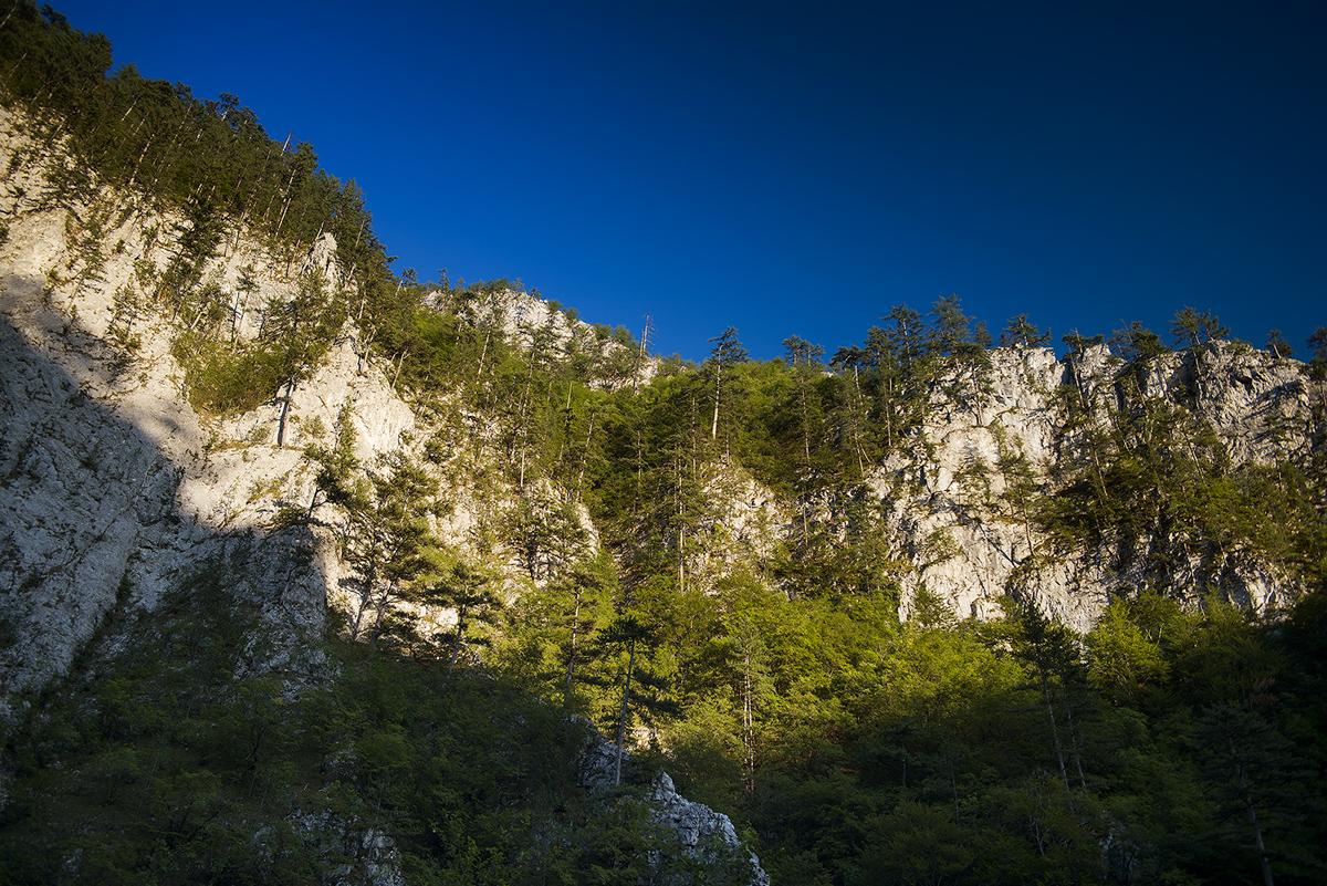 Тешелска чудна гора